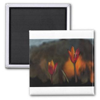 54 - Flowers…Windows Wallpaper Magnet