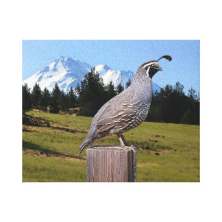 59C QUAIL ON DREAM POINT (8X10) CANVAS PRINT