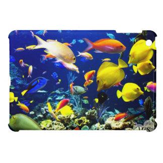 5-6 subacuático