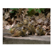 5 Baby Chipmunks Postcard