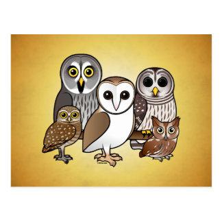 5 Birdorable Owls Postcard