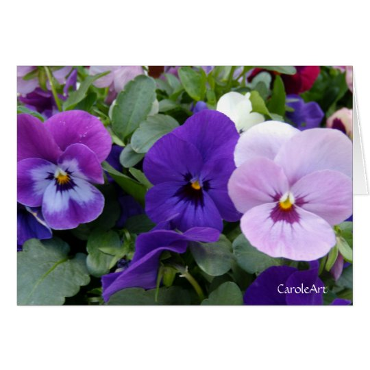 5 Blue Purple Lavender Pansies Card