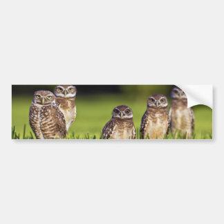 5 Burrowing Owls Athene Cunicularia Car Bumper Sticker