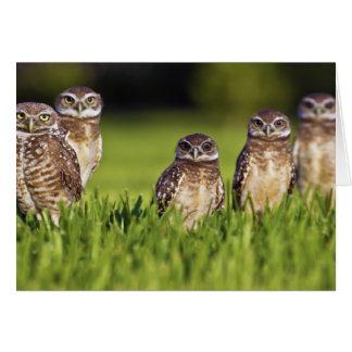5 Burrowing Owls Athene Cunicularia Greeting Card