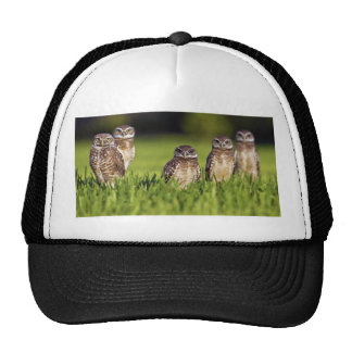 5 Burrowing Owls Athene Cunicularia Trucker Hat