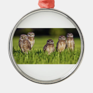 5 Burrowing Owls Athene Cunicularia Round Metal Christmas Ornament