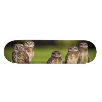 5 Burrowing Owls Athene Cunicularia Skateboard Deck