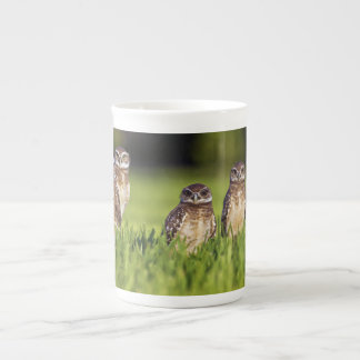 5 Burrowing Owls Athene Cunicularia Tea Cup