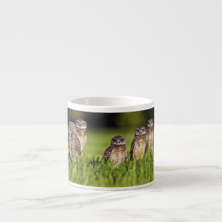 5 Burrowing Owls Athene Cunicularia 6 Oz Ceramic Espresso Cup