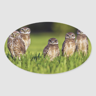 5 Burrowing Owls Athene Cunicularia Oval Sticker