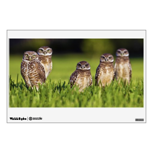 5 Burrowing Owls Athene Cunicularia Wall Graphics