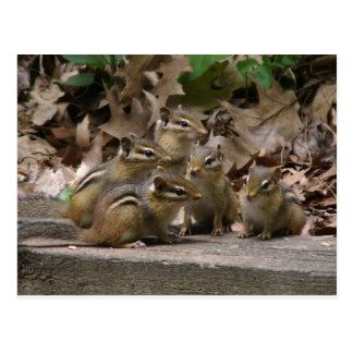 5 Chipmunks del bebé Tarjeta Postal