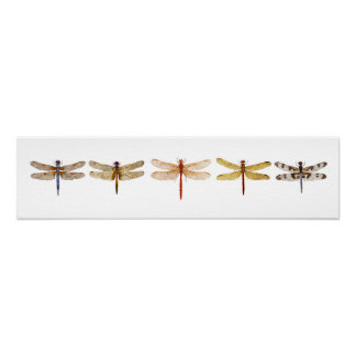 5 Dragonflies Poster