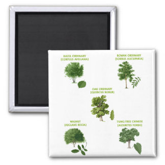 5 Trees 2 Inch Square Magnet