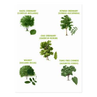 5 Trees Postcard