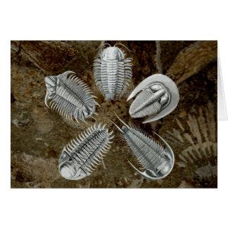 5 Trilobites Card