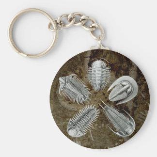 5 Trilobites Keychain