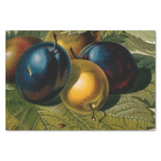 5 vintage plums painting tissue paper