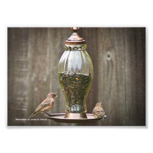 5 x 7 Bird Feeder #1 Photographic Print