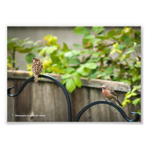 5 x 7 Bird Feeder #2 Art Photo