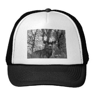 5x5 Mule Deer Trucker Hat