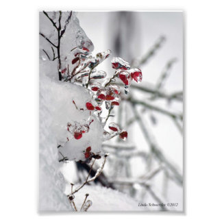 5X7 Red Huckleberry Encased in Ice Photo Print