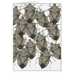 6-07-14 stink bugs rev.png greeting card