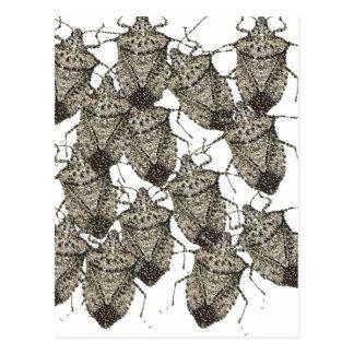 6-07-14 stink bugs rev.png postcard