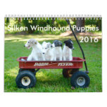 6 2016 Silken Windhound Puppies Calendar