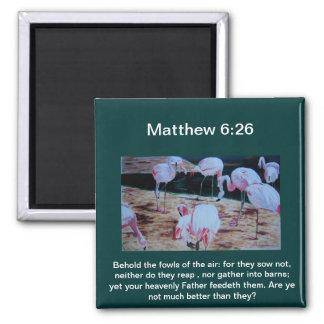 6:26 de Matt de los pájaros de los flamencos por c Imán Cuadrado