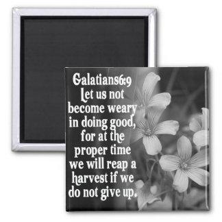 6:9 DE LA ESCRITURA GALATIANS DE LA BIBLIA IMANES DE NEVERA