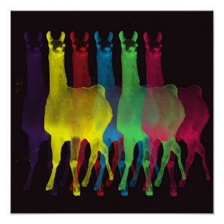6 llamas 6 colors canvas with black background poster