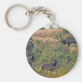 6 Point Bull Elk and Two Cows Wildlife Photo Basic Round Button Keychain