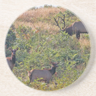 6 Point Bull Elk and Two Cows Wildlife Photo Drink Coaster