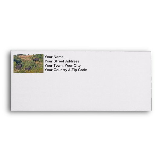 6 Point Bull Elk and Two Cows Wildlife Photo Envelope
