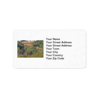 6 Point Bull Elk and Two Cows Wildlife Photo Label