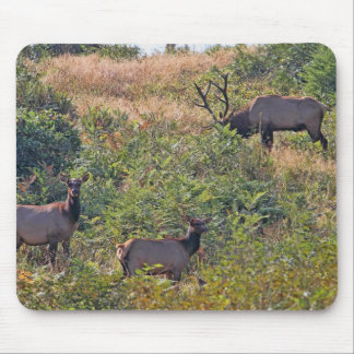 6 Point Bull Elk and Two Cows Wildlife Photo Mouse Pad