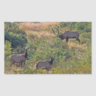 6 Point Bull Elk and Two Cows Wildlife Photo Rectangular Sticker