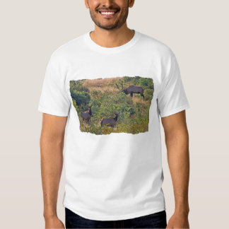 6 Point Bull Elk and Two Cows Wildlife Photo Shirt
