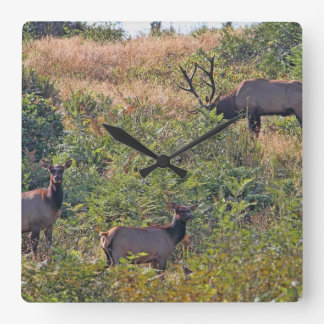 6 Point Bull Elk and Two Cows Wildlife Photo Square Wall Clock