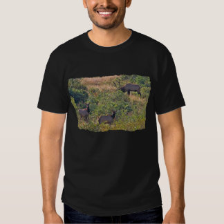 6 Point Bull Elk and Two Cows Wildlife Photo Tee Shirt