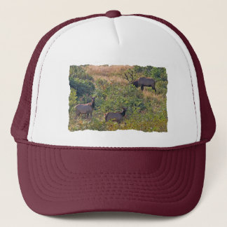 6 Point Bull Elk and Two Cows Wildlife Photo Trucker Hat