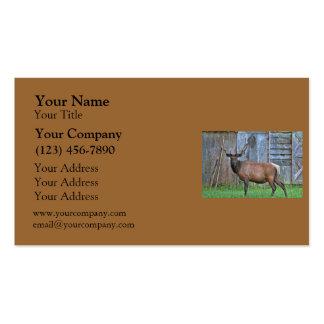 6 Point Bull Elk Photo Business Card