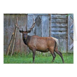 6 Point Bull Elk Photo Card
