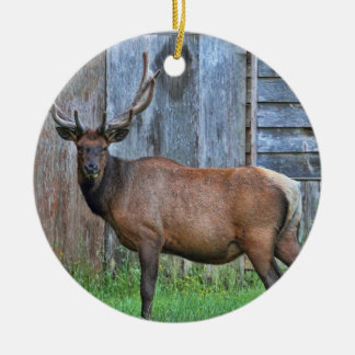 6 Point Bull Elk Photo Ceramic Ornament