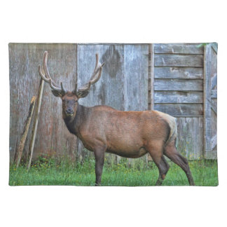 6 Point Bull Elk Photo Cloth Placemat