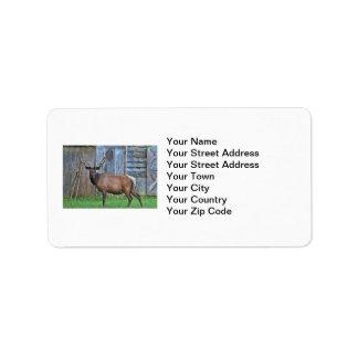 6 Point Bull Elk Photo Label