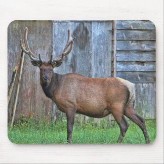 6 Point Bull Elk Photo Mouse Pad