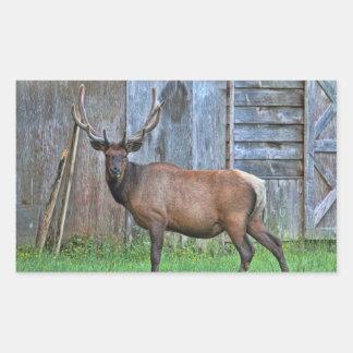 6 Point Bull Elk Photo Rectangular Sticker