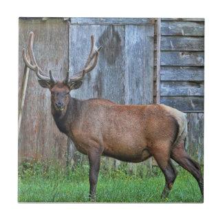 6 Point Bull Elk Photo Tile